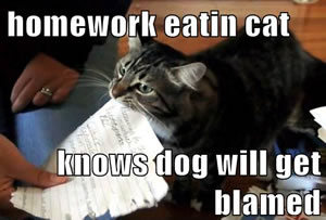homework eating cat
